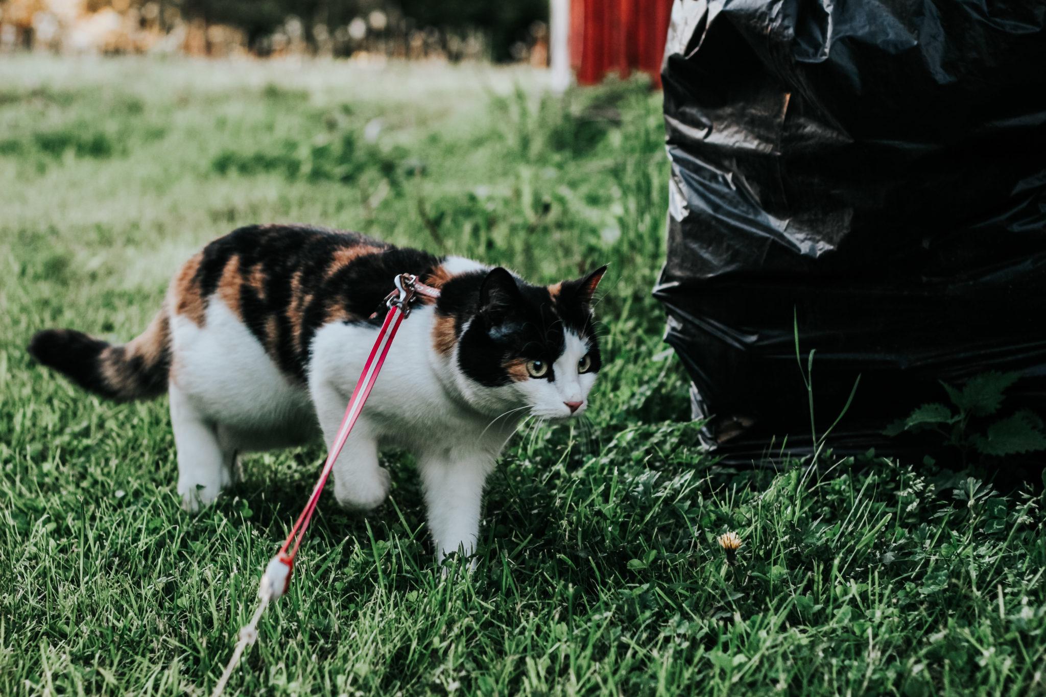 kissan raakaruokailu